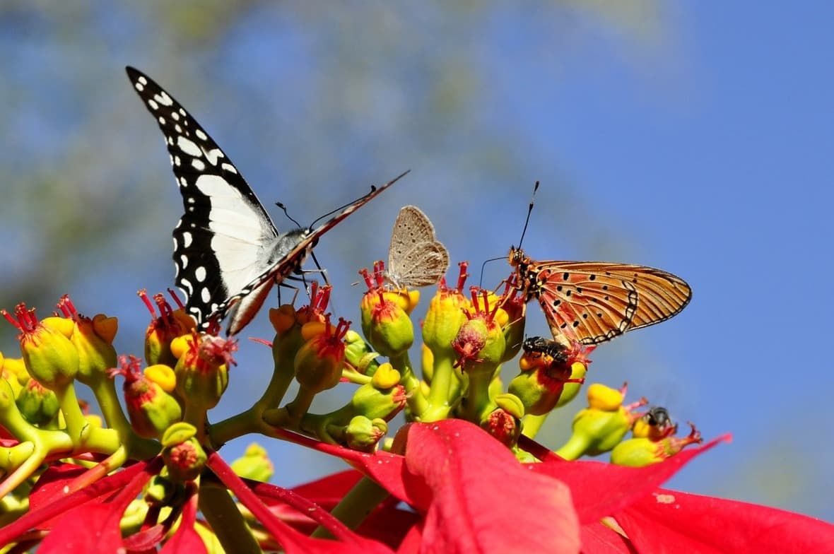 Příspěvek změny vživotě - motýl