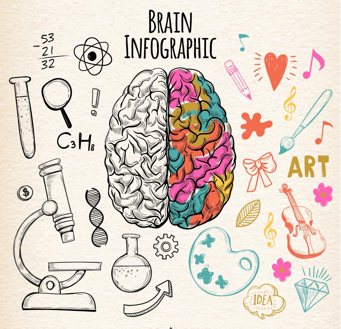 Pravá mozková hemisféra - rozvijí kreativitu