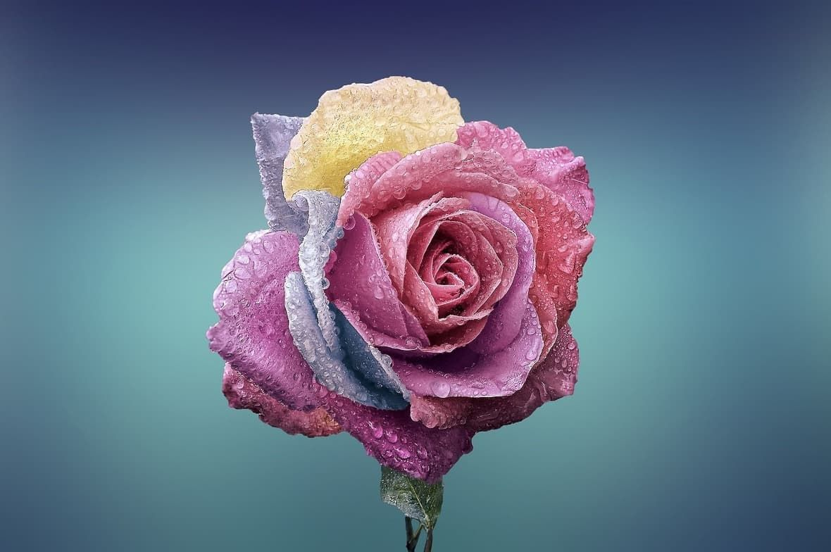 Miluji vše krásné - růže